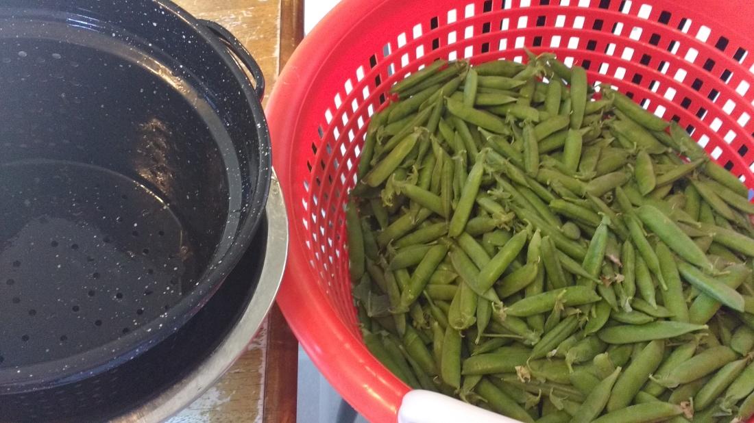 bushel of peas