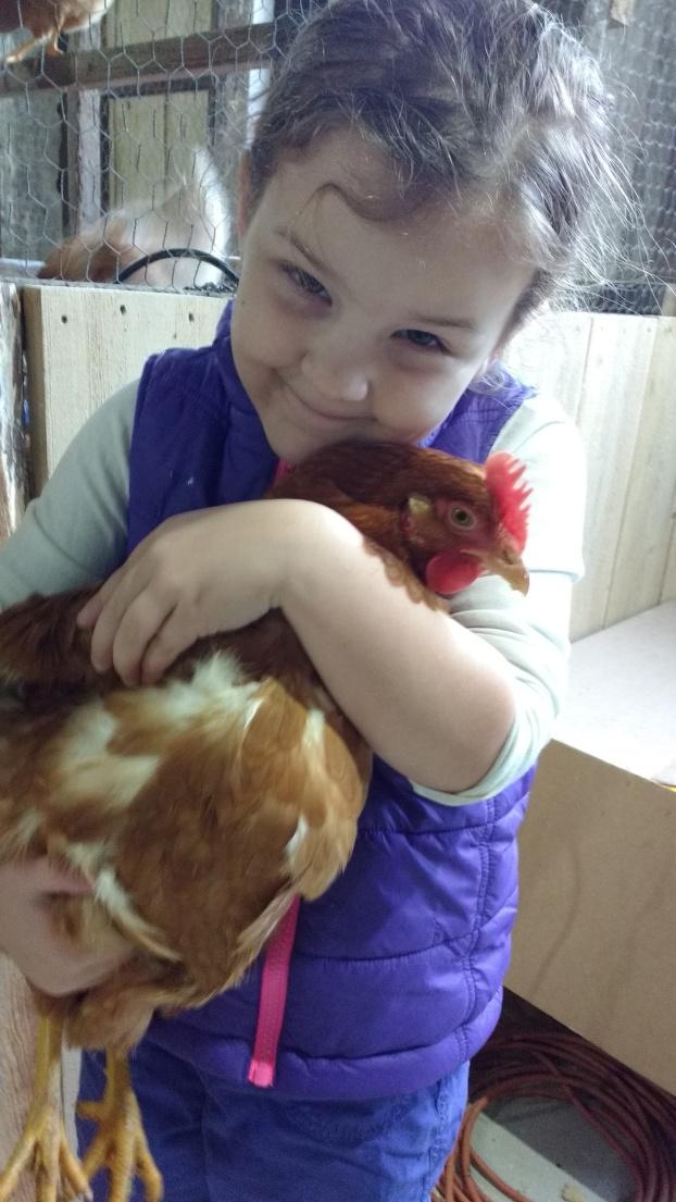 addy-chicken